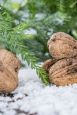 Walnuts in winter scene — Stock Photo