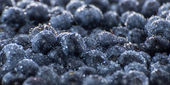 Wet Blueberries Background — Stock fotografie
