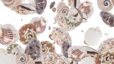 Falling Shells — Stock Video