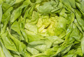 Lettuce macro shot — Stock Photo