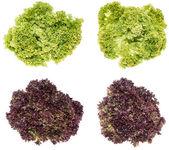 Fresh lettuce isolated on white — Stock Photo