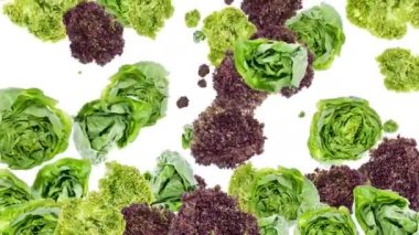 Falling lettuce background video — Stock Video