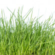 Grass isolated on white (side view) — Stock Photo
