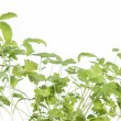 Small Seedlings isolated on white — Stock Photo