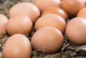 Fresh Eggs on wooden background — Stock Photo