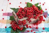 Fresh Red Currants in a box — Stock Photo