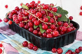 Fresh Red Currants — Stockfoto