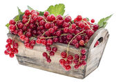 Isolated red Berries — Stock Photo