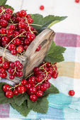 Box with fresh Currants — Stock Photo
