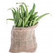 Green Beans (isolated) — Stock Photo
