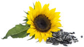 Sunflower with Seeds on white — Stock Photo