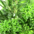 Fresh Herbs rotating — Stock Video