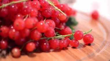 Rotating red Currants — Stock Video
