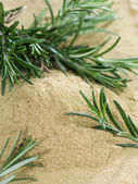 Heap of dried Rosemary — Stock Photo