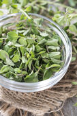 Verse oregano — Stockfoto