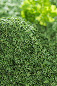 Heap of dried Parsley — Stock Photo
