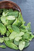 Heap of fresh Mint — Stock Photo