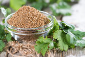 Portion of rubbed Coriander — Stock Photo