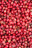 Pink Peppercorns Background Image — Stock Photo