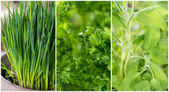 Different Herbs — Stock Photo