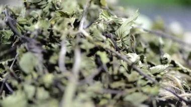 Dried Mint leaves — Stock Video