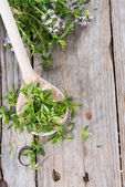 Fresh Winter Savory on a wooden spoon — Stock Photo