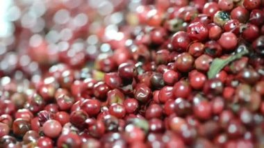 Rotating Pink Peppercorns — Stock Video