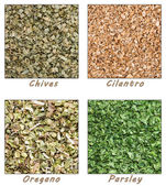 Dried Herbs (Chives, Cilantro, Parsley, Oregano) — Stock Photo