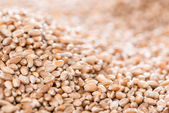 Wheat Grains Background — Photo