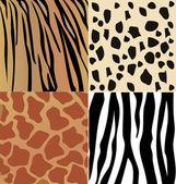 Set of giraffe, cheetah, tiger and zebra skins vector — Stock Vector