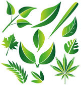 Set of green stylized leafs illustration vector — Stock Vector