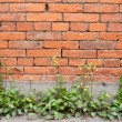 Red brick building wall — Stock Photo #13617006
