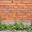 Stock Photo: Red brick building wall