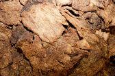 Carne essiccata — Foto Stock
