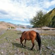 Stock Photo: Pastoral scenery on plateau, horse