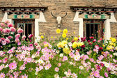 Planting flowers Tibetan dwellings — Stock Photo
