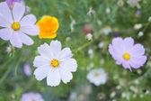 Wild flowers blooming — Stock Photo