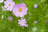 Wild flowers blooming — Stock Photo