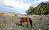 Pastoral scenery on the plateau, the horse — Stock Photo