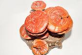 Ganoderma lucidum, Chinese herbal medicine — Stock Photo