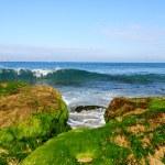 Seaweed — Stock Photo #21166735