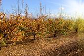 Jardín de otoño — Foto de Stock