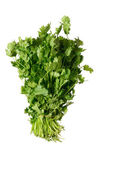 Cilantro bunch — Stock Photo