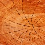 Wooden texture — Stock Photo #8687752