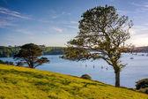 River Helford Cornwall — Stock Photo
