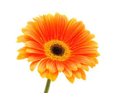 Flower on a white background — Stock Photo