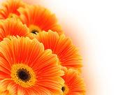 Orange flowers — Stock Photo
