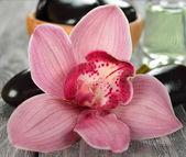 Orquídea close-up — Foto Stock