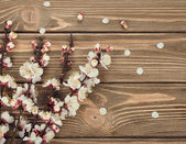 Blossoming branches — Stock Photo