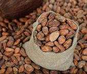 Ziarna kakaowego w torbę — Zdjęcie stockowe